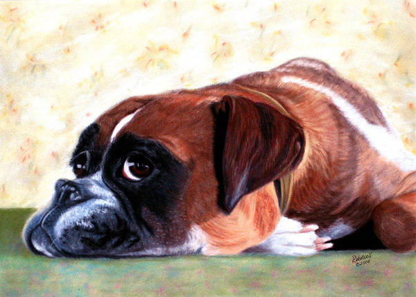 Dogs; Pets; Animals; Boxer; Pedigree; Best Friend; Cupboard Love; Portrait; Pet Portrait; Cute; Intelligent; Canvas; Poster; Posters; Print; Prints; Rebelwolf Art Print featuring the pastel Cupboard Love by Rebelwolf