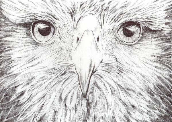 Birds Art Art Print featuring the drawing Animal Kingdom Series - Bird Of Prey by Bobbie S Richardson