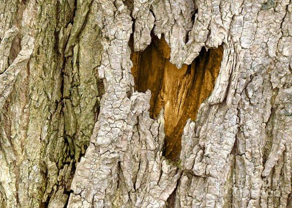 Tree Art Print featuring the photograph Bark Heart by Deborah Johnson