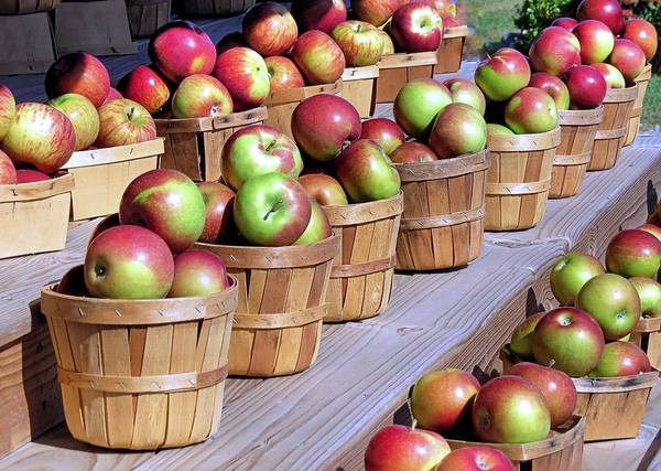 Baskets Or Apples Art Print featuring the photograph Baskets Of Apples by Janice Drew