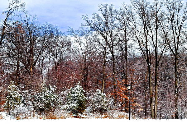 Snow Art Print featuring the photograph Beautiful Scenery by Frozen in Time Fine Art Photography