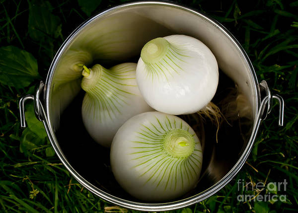 Onions Art Print featuring the photograph Bucket Of Onions by Wilma Birdwell