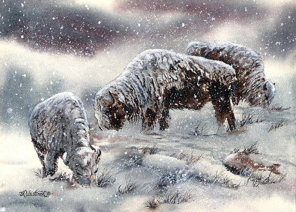 Buffalo Art Print featuring the painting Buffalo In Snow by Jill Westbrook