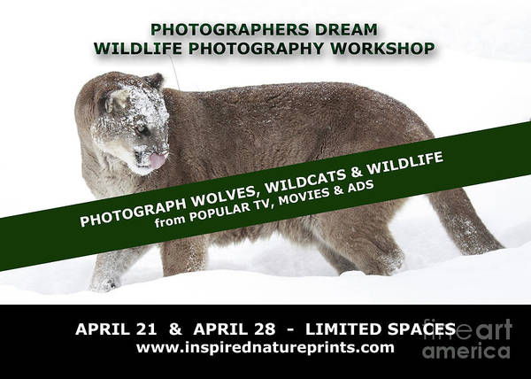 Canadian Art Print featuring the photograph Canadian Wolves Wildcats And Wildlife Photography Workshop by Inspired Nature Photography Fine Art Photography