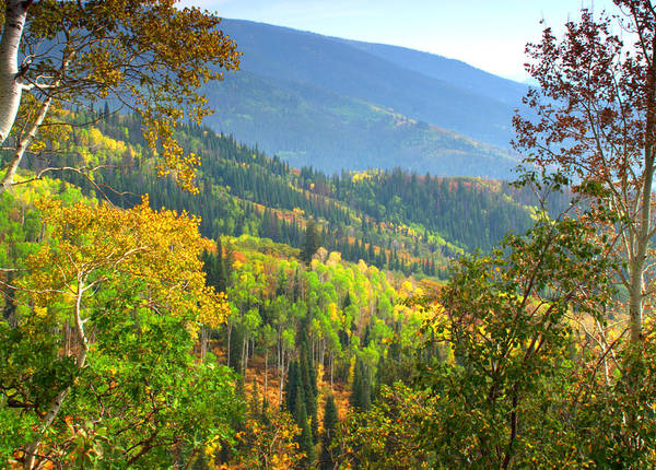 Colorful Colorado Turning Aspens Mountain Landscape Scene Art Print featuring the photograph Colorful Colorado by Brian Harig