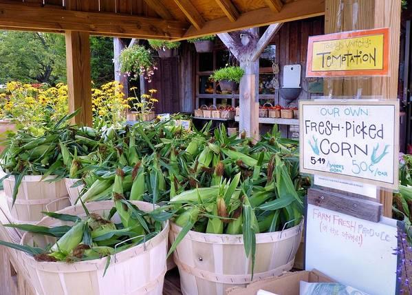 Corn Art Print featuring the photograph Corn by Janice Drew