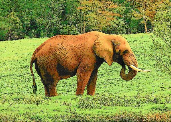 Digital Art Art Print featuring the photograph Elephant by Rodney Lee Williams