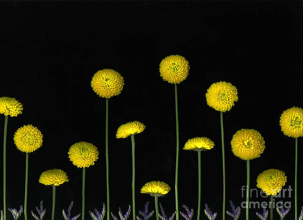 Scanography Art Print featuring the photograph Field Of Gold by Christian Slanec