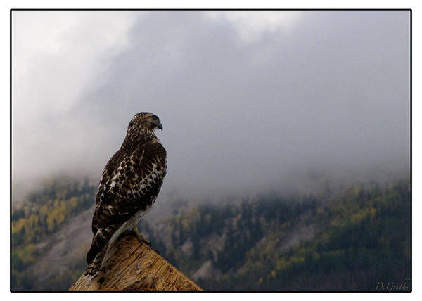 Hawk Art Print featuring the photograph Foggy Morning by Darlene Grubbs