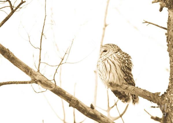 Owls Art Print featuring the photograph Keeping Watch by Cheryl Baxter