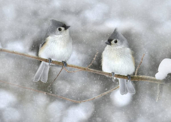 Bird Art Print featuring the photograph Let It Snow by Lori Deiter