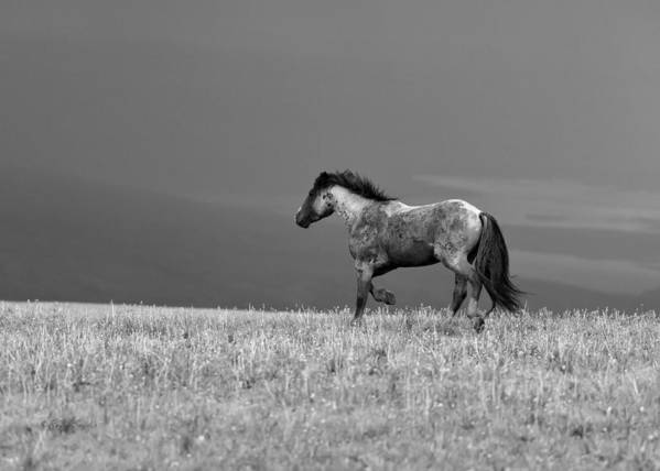 Beautiful Art Print featuring the photograph Mustang 2 Bw by Roger Snyder