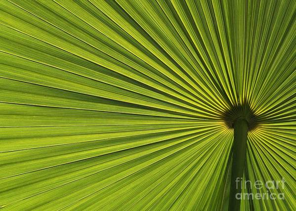 Green Art Print featuring the photograph Palm Fron Abstract by Sabrina L Ryan