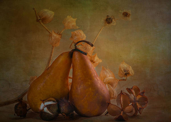 Still Life Art Print featuring the photograph Pear Still Life by Carolyn Dalessandro