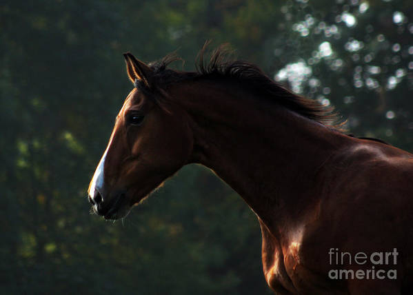 Horse Art Print featuring the photograph Portrait Of A Horse by Angel Ciesniarska