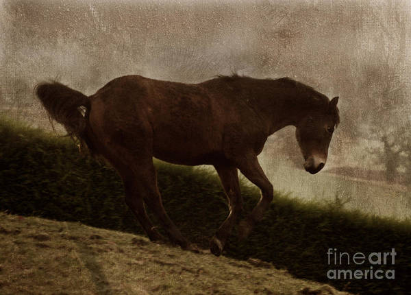 Prancing Horse Art Print featuring the photograph Prancing Horse by Angel Ciesniarska