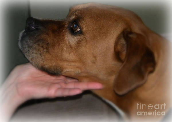 Bulldog Art Print featuring the photograph Puppy Loyalty by Sandra Clark