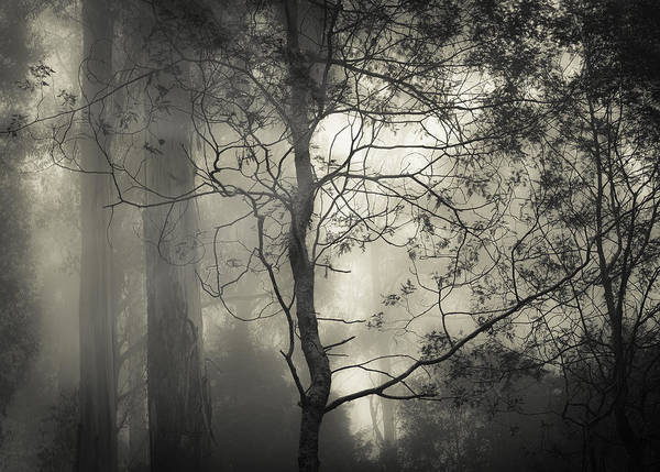 Fog Print featuring the photograph Silent Stirring by Amy Weiss