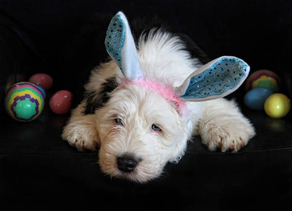 Puppy Art Print featuring the photograph Tired Little Bunny by Terry Cervi