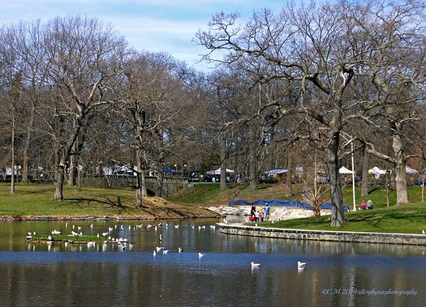 Deering Oaks Pond Art Print featuring the photograph Touch Of Spring by Catherine Melvin