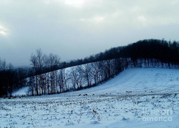 New York Art Print featuring the photograph Turkeys In A Winter Field by Christian Mattison