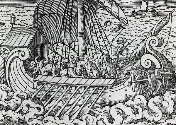 Ship; Boat; Animals; Dogs; Dog; Oars; Transporting; Sailing; Sail; Voyage; Sea; Waves; Rowing; Transportation; Vikings; Rough Seas; Medieval Art Print featuring the drawing Viking Ship by German School
