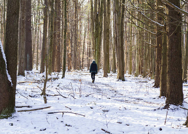 Woods Art Print featuring the photograph Winter Hike by Tim Fitzwater