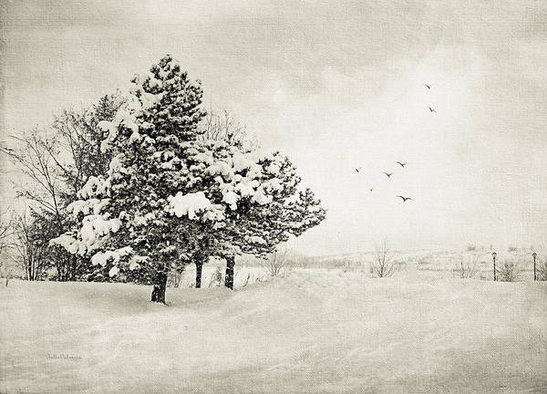Winter Art Print featuring the photograph Winter White by Julie Palencia