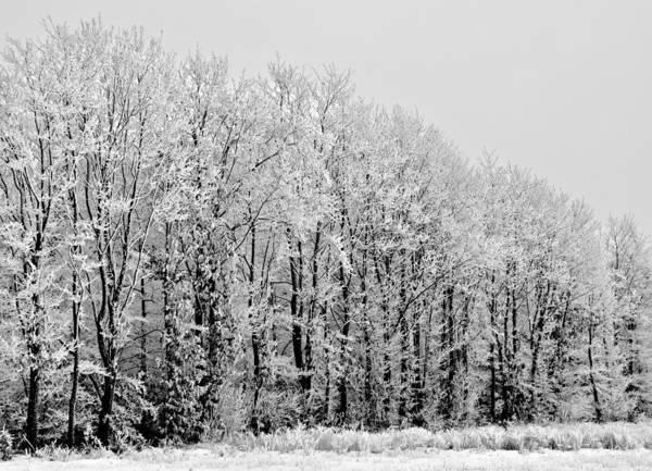 Winter Art Print featuring the photograph Brittle by Odd Jeppesen