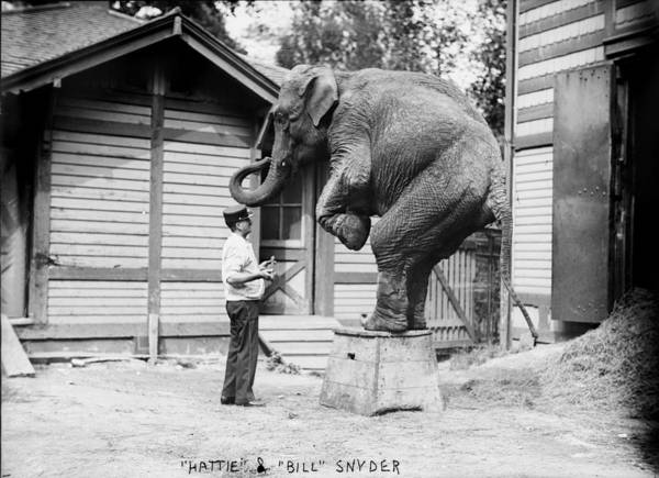 1900s Art Print featuring the photograph Bill Snyder, Elephant Trainer by Everett
