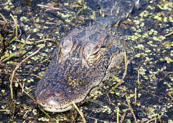 Gator Art Print featuring the photograph Camouflaged Gator by Carol Groenen
