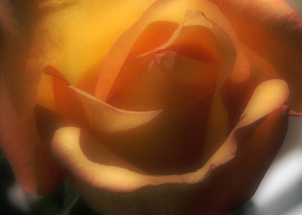 Roses Art Print featuring the photograph Dreams Of Rose by Faith Gauthier