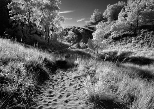 Nature Art Print featuring the photograph Dunes Path by Bob Nardi