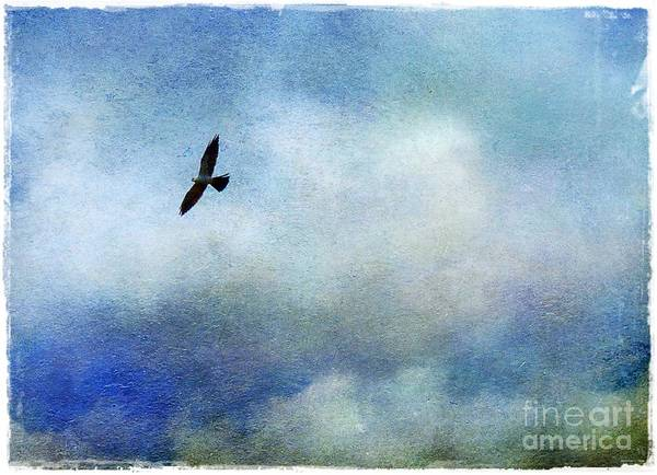 Mississippi Art Print featuring the photograph Far Above by Judi Bagwell