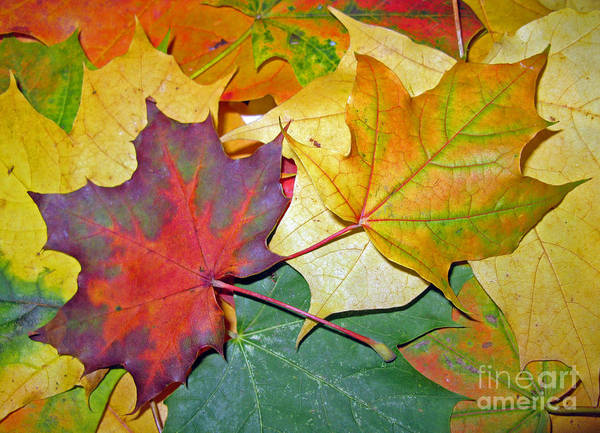 Fall Art Print featuring the photograph Happy We Are Together by Ausra Huntington nee Paulauskaite