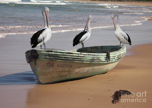 Tre Amigos Friends Three Australian Pelican Australia Black White Beak Preening Feathers Dinghy Boat Green Chain Seaweed Beach Surf Sand Art Print featuring the photograph Pelican Heaven by Brian Gunter