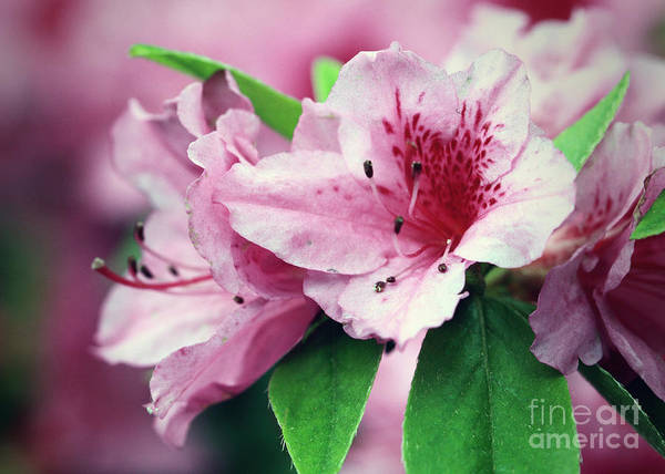 Art Art Print featuring the photograph Pink Tiger by Melissa Moore-Clingenpeel