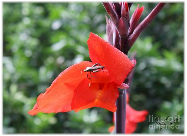 I Am Recently Back From A Two Week Trip To Taiwan. While There I Took Some Wonderful Photos Of Trees And Flowers. Here Is An Example. Art Print featuring the digital art Red Flower With Bug by Maxine Bochnia