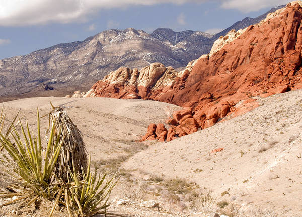 Red Rock Canyon Art Print featuring the photograph Red Rock Canyon - Keystone Thrust by Donna Robichaud