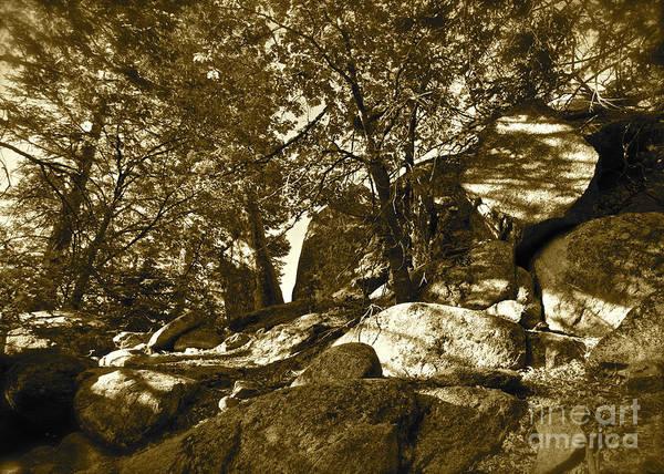 Maynard Art Print featuring the photograph Rocks And Trees 1 Sepia by Maynard Smith