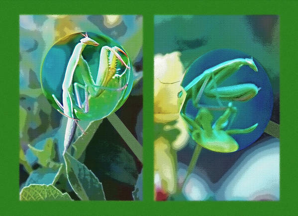 Praying Mantis Art Print featuring the photograph Science Class Diptych - Praying Mantis by Steve Ohlsen