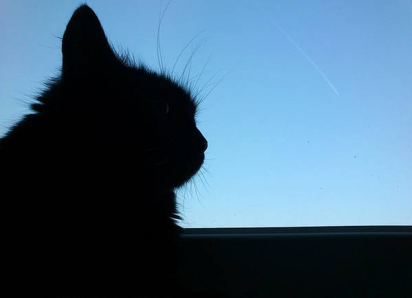 Cat Print featuring the photograph Silhouette by Lucy D