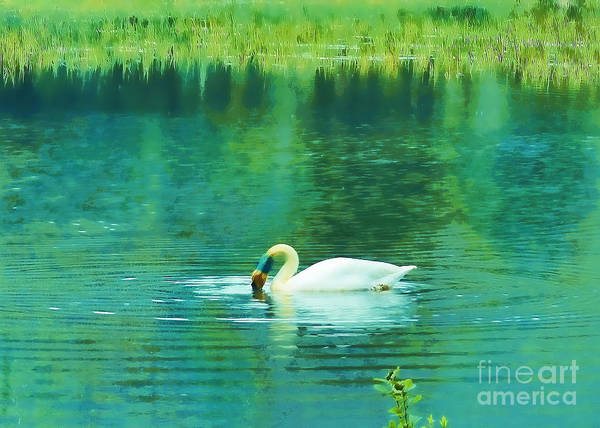 Swan Art Print featuring the photograph Swan Lake by Judi Bagwell