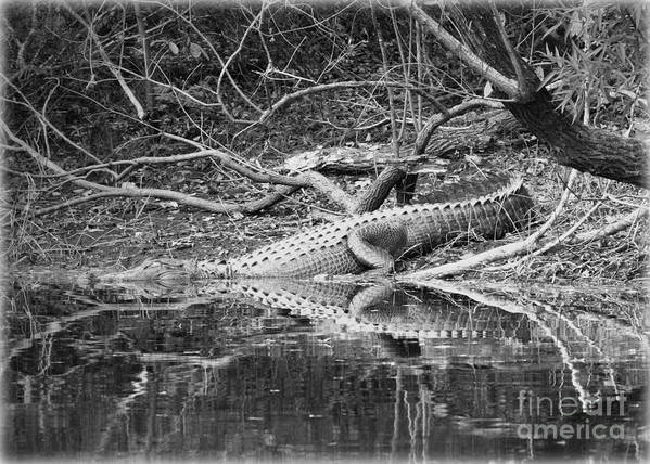 Alligator Art Print featuring the photograph The Beast That Lives Under The Bridge by Carol Groenen