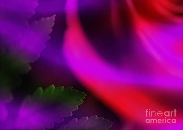 Leaf Art Print featuring the photograph The Leaf And The Rose by Judi Bagwell