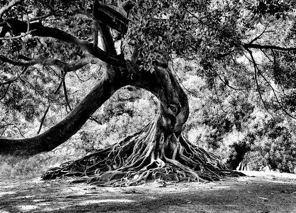 Tree Art Print featuring the photograph Tree Of Life - Bw by Kenneth Mucke