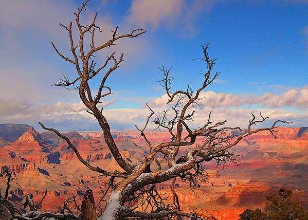 Grand Canyon Art Print featuring the photograph Tree Over Grand Canyon by Greg Wyatt