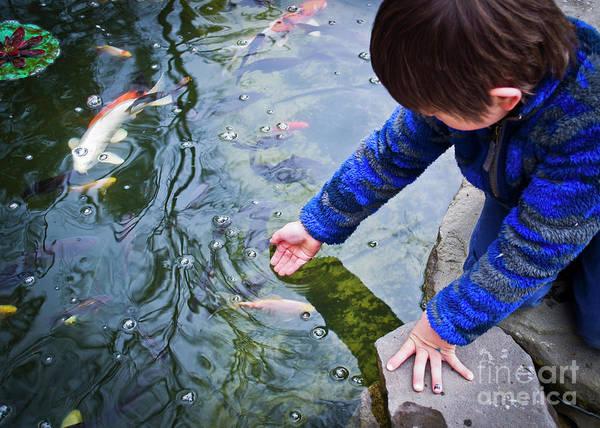 Koi Fish Art Print featuring the photograph Curious Koi Boy by Lauren Kunkler