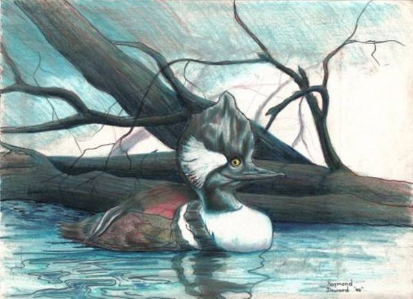 Duck Merganser Duck Pond Water Lake Birds Nature Wildlife Art Print featuring the drawing Merganser Duck by Raymond Doward