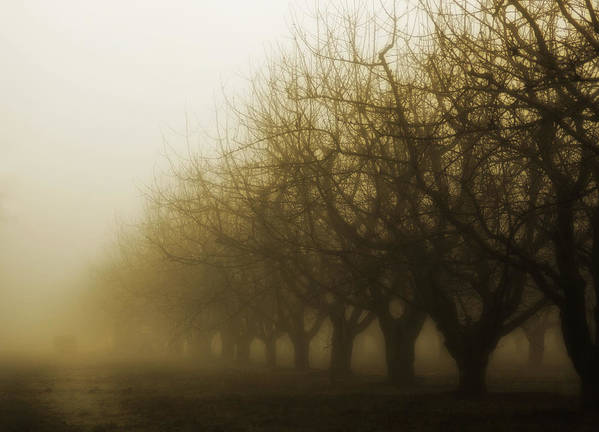 Sepia Art Print featuring the photograph Orchard In Fog by Rebecca Cozart